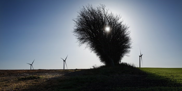 Photo:Torben Nielsen_Center for Electric Power and Energy_Wind turbines and bush