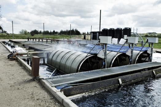 Freshwater recirculation aquaculture paved the way for saltwater recirculation technology. Foto Martin Dam Kristensen